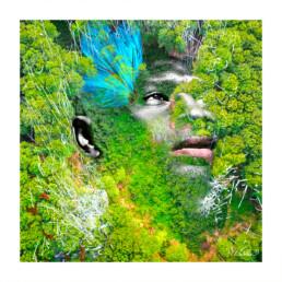 Montage Photoshop CC : la Canopée